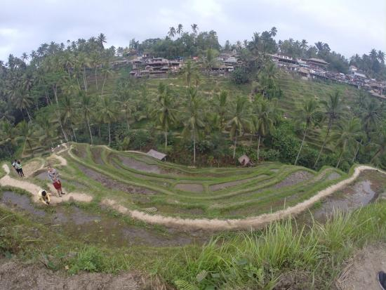 Tegalang teras sawah picture of tegalalang rice terrace for Tegalalang rice terrace ubud