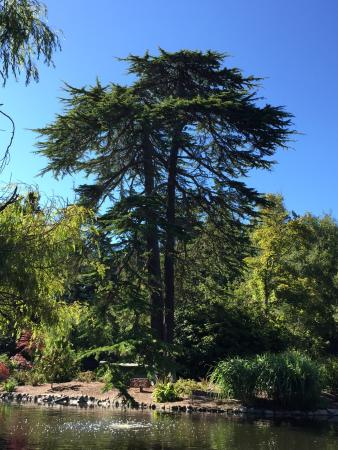 Terrific variety of trees and plants