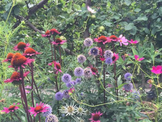 Jardins picture of jardin des cinq sens yvoire for Jardin des 5 sens yvoire
