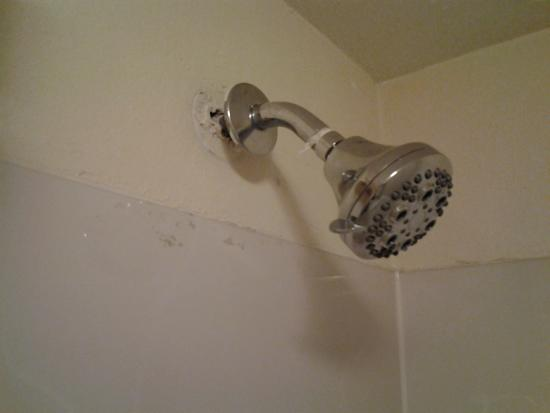 كواليتي إن ويلمنتجتون: shower