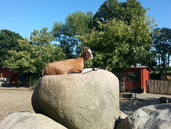 Gromitz, Germany: Zoo