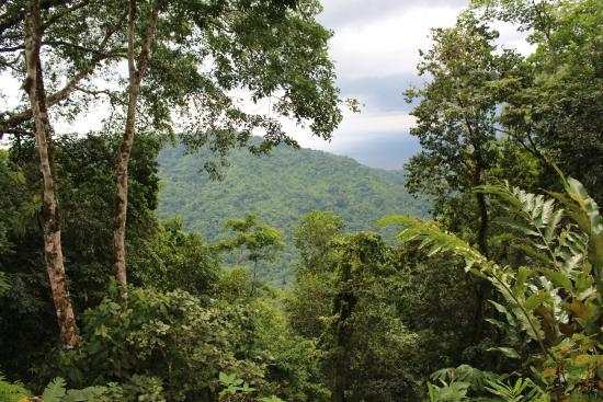 Pura Vida Gardens and Waterfalls: On the edge of Carara National Park
