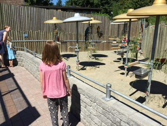 Cougar Mountain Zoo : Wanted to take pics of my granddaughter, but she was too interested in the exhibits