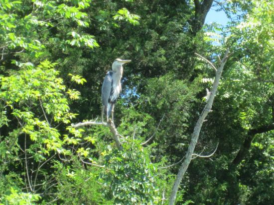 Cowan Lake State Park: One of the birds we saw during our kayaking.