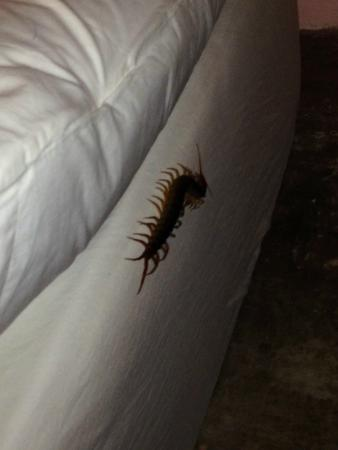 AC Resort: Centipede in hotel room!