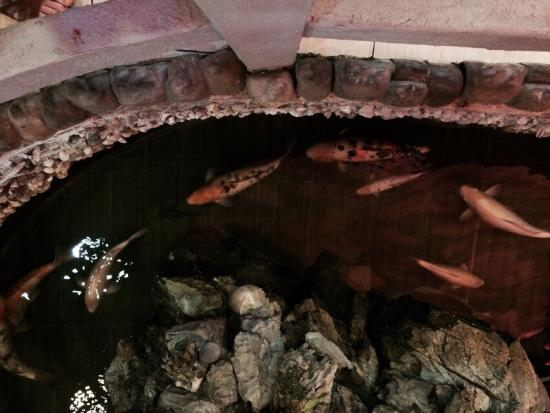 Hibachi Buffet : Pond is lovely.