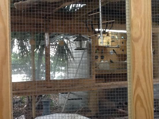 Mariner Motel: This shows the new animal cage with small critters.