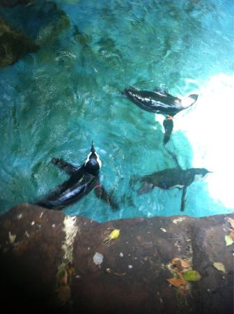 Dallas World Aquarium August 2015 Picture Of Dallas