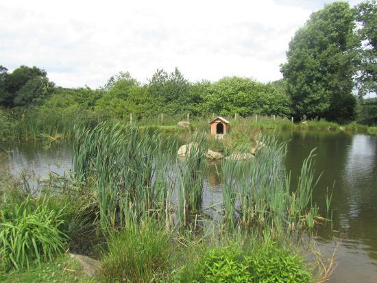 Saint-Michel-de-Montjoie, França: Duck Pond