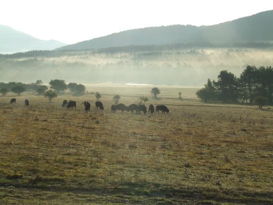 buffalo picture of reserve biologique des monts d azur thorenc tripadvisor