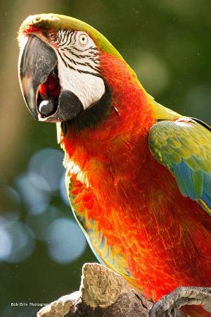 Сиракузы, Нью-Йорк: Rosamond Gifford Zoo