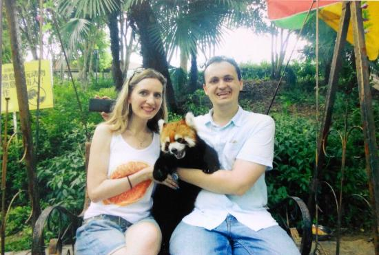 Wuhan Zoo: red panda)