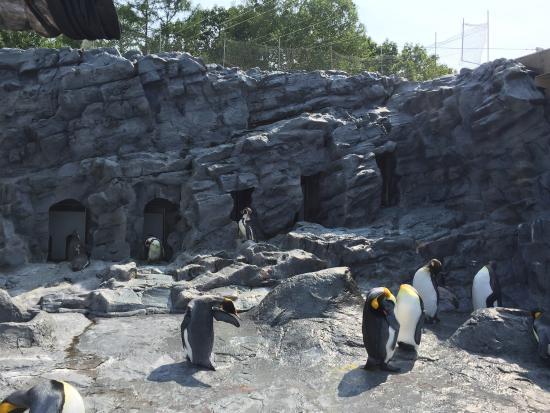 Asahiyama Zoo - Picture of Asahiyama Zoo, Asahikawa - TripAdvisor