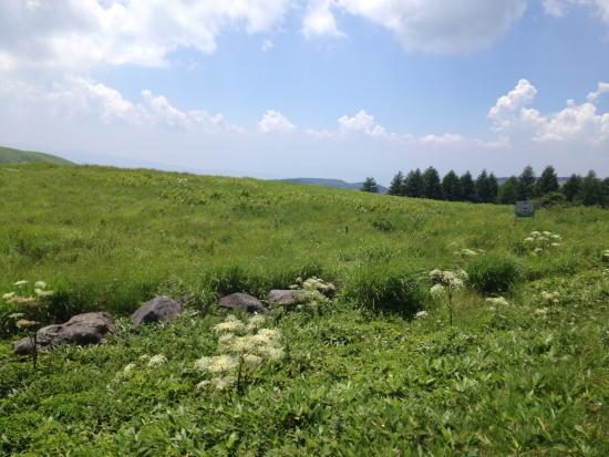Kirigamine Fujimidai: 霧ケ峰高原