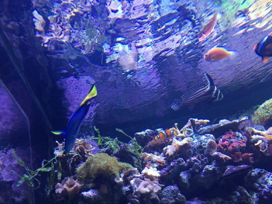 Mermaid Show Picture Of Ripley S Aquarium Myrtle Beach