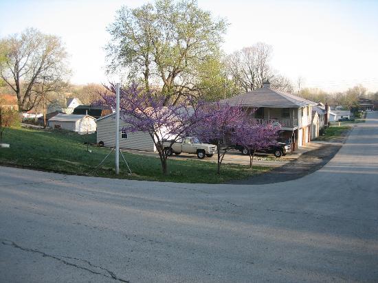 Sugar Creek, MO : Redbuds in bloom