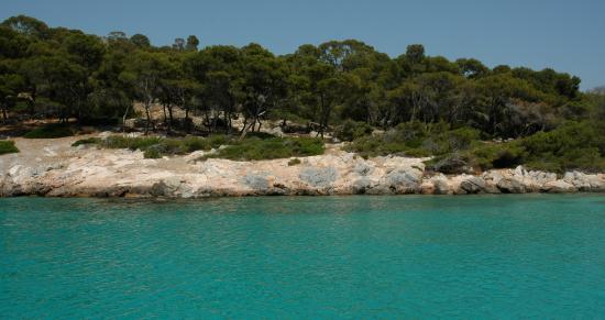 Hotel Milos: Crystal clear water