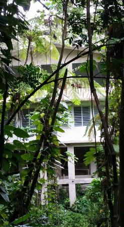 Rainforest Inn: Jungle suite