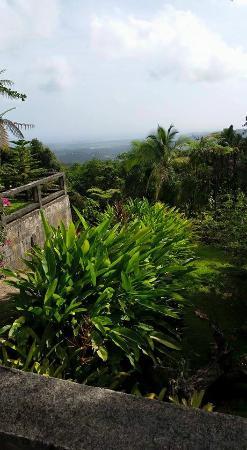 Rainforest Inn