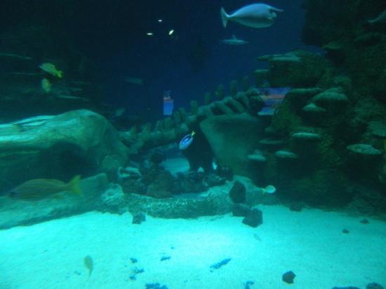 Comienzo De Visita Picture Of Sea Life London Aquarium