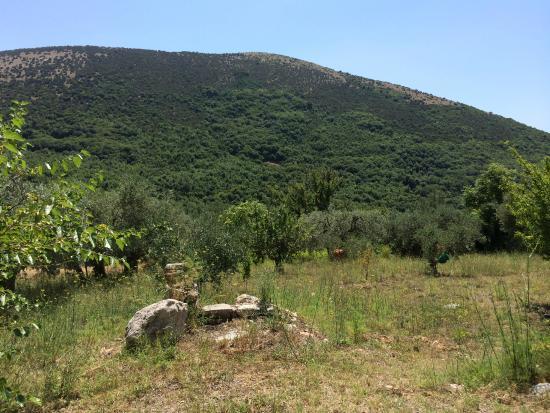 Hotel Castello dei Principi: Olive treed field behind the hotel