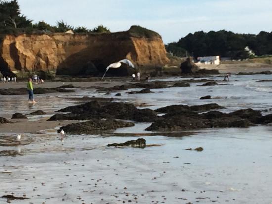 Penestin, Франция: Super balade le long de l'océan à marée basse