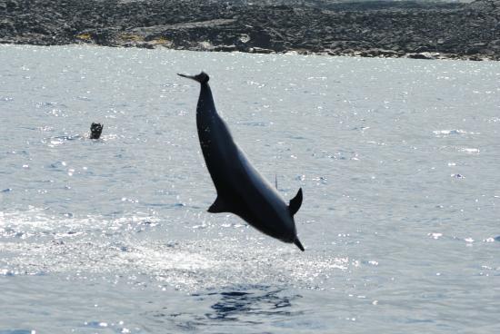 Kona Ocean Adventures: Spinning Spinner Dolphin