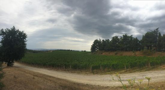 Weingut San Felice: Breathtaking vineyard!