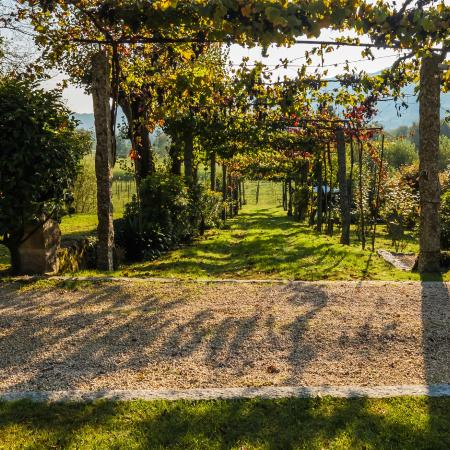 Quinta da Cancela: The Old Wine Pergola