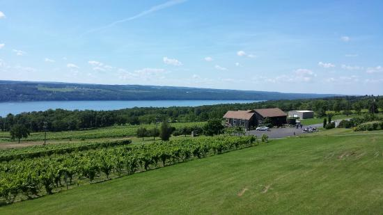 Finger Lakes Wine Country: View from winery on the East Side of Lake Seneca - Atwater (not 100% could be Lamoreaux Landing)