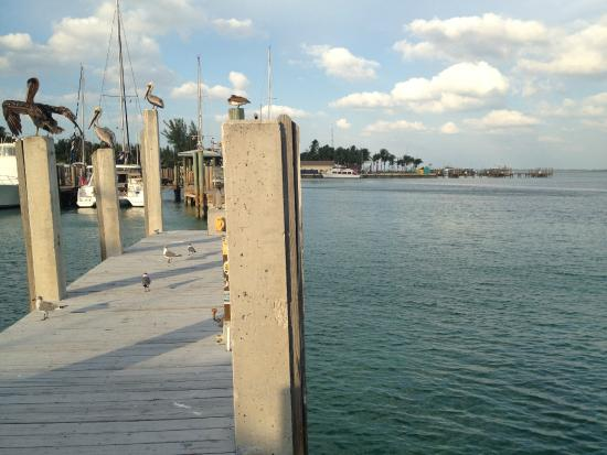 Sea Crest Hotel and Marina: The Dock
