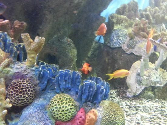 Tropical fish exhibit picture of new england aquarium for Fish marlborough ma