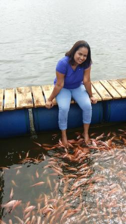 Cinnamon island picture of madu river balapitiya for Fish therapy near me
