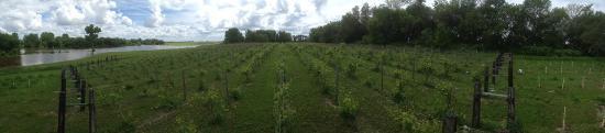 East Grand Forks, MN: Vineyard