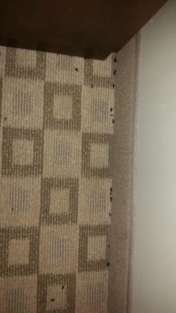 Comfort Suites at Tucson Mall: Bug stuff along wall near bed
