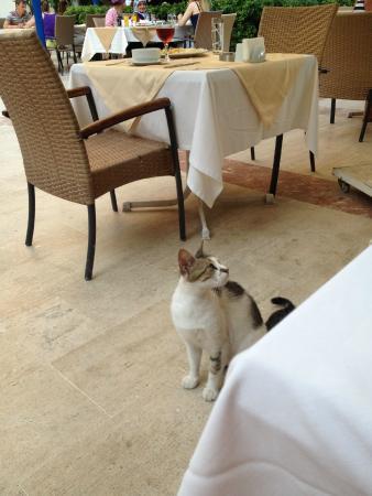 Ozkaymak Falez Hotel : Dinner