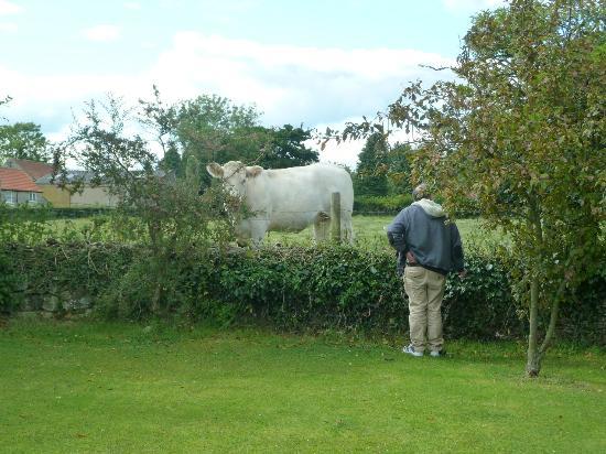 Fadmoor, UK: Morning Mr Cow