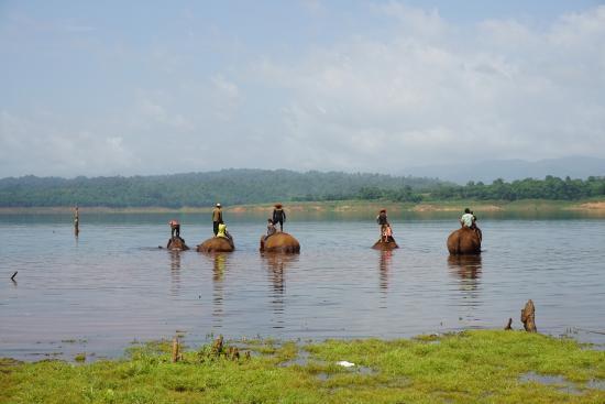 Ganesha Park: Les éléphants se baignent et nous aussi