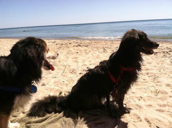 Harrisville State Park: dog beach