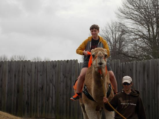 Camel Rides Picture Of Creation Museum Petersburg