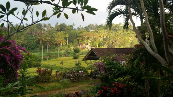 Puri Sawah Bungalows: view from the patio