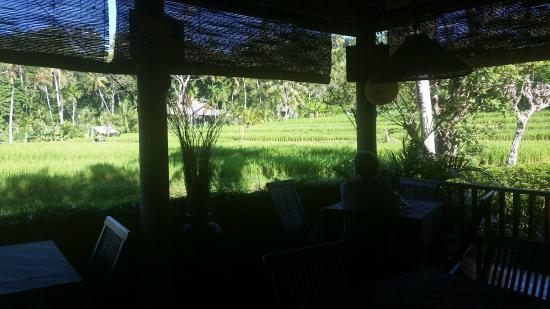Puri Sawah Bungalows: scenery from dining room