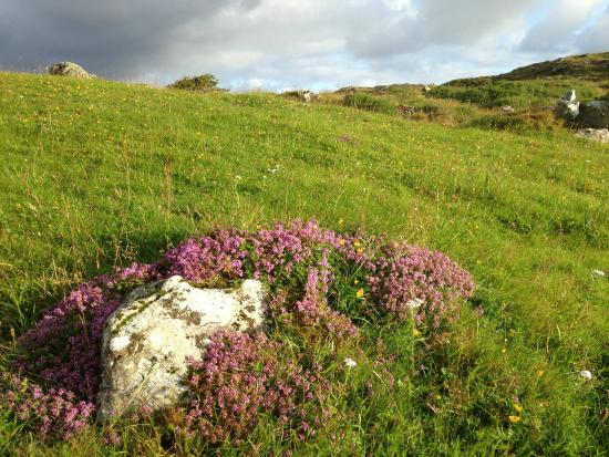 Faul House: Walking the land