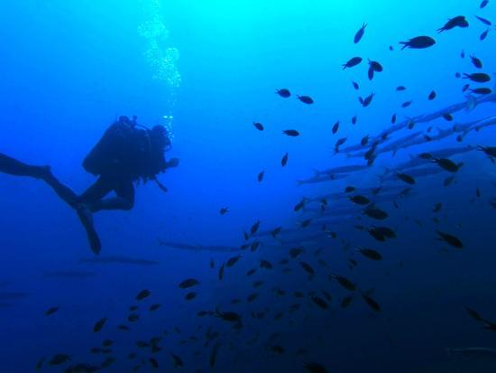 Inizio immersione foto di ustica diving ustica - Dive per sempre ...