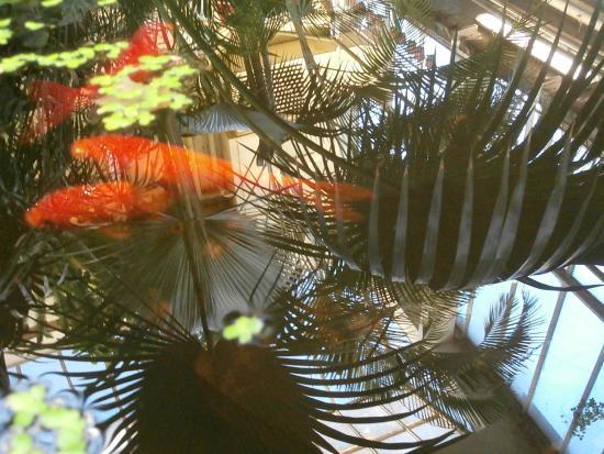 Botanical Gardens of Strasbourg University: .
