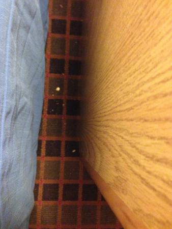 Days Inn Nashville at Opryland/Music Valley DR: Nasty crumbs between the bed and night stand