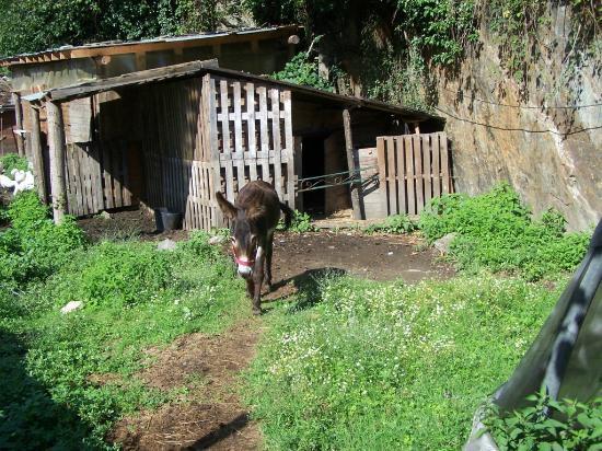 Farm In Valle sul Fiume: Zeus