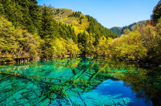 Jiuzhaigou Natural Reserve: wood under water