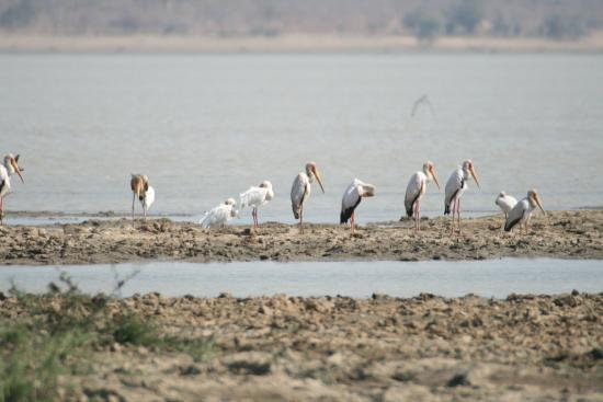 Kazuni Safari Camp: Yellow-billed Storks and African Spoonbill from the hut