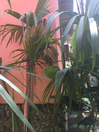 Hotel Perla Negra: photo1.jpg